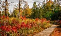 Winding boardwalk into autumn beauty