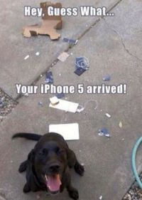 Your IPhone came today