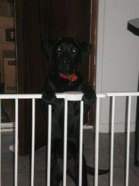Let Me Out . . . . please?