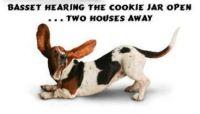 Gotta love the basset ears