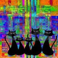 CATS & RAINBOWS