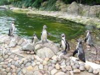 P-p-p-pick up a penguin!