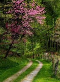 Redbud by the Road, Harlan County, Kentucky