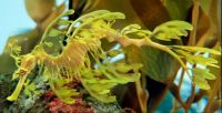 Sea Dragons_4