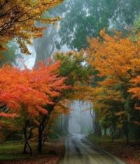 Mt. Dandenong, Australia  6704
