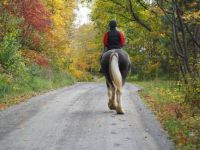 Southbound horse in autumn