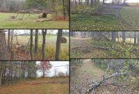 Theme Trees: Windstorm damage