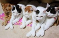 Folding Of The Paws