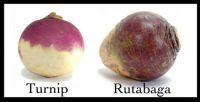 Turnip & Rutabaga