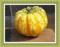 Čas dýní... Time Pumpkins...