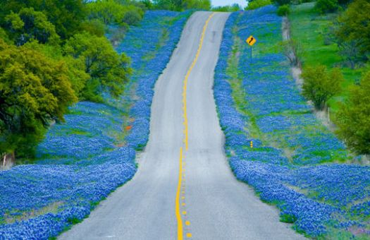 TX Hill Bluebonnet Tour