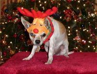 Rudolf. the Pissed-Off Santa