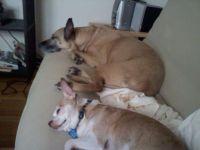Kelly & Champ, sleeping during Hurricane Irene