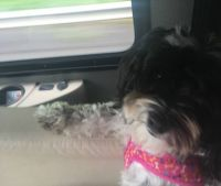 charlee riding in the Motorhome