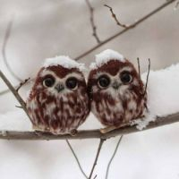 Baby Owls in Snow