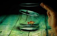 Ocean in a glass