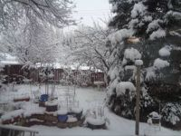 19 11 20 My Backyard_DSC00764