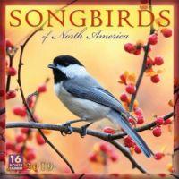 2019 Wall Calendar Songbirds of North America