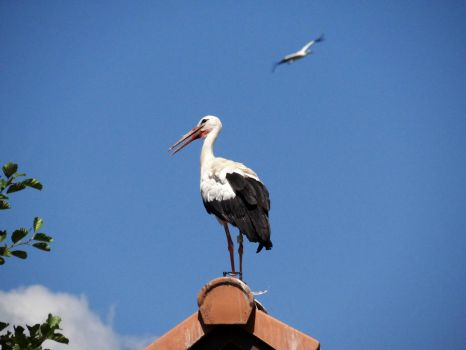 With Stork