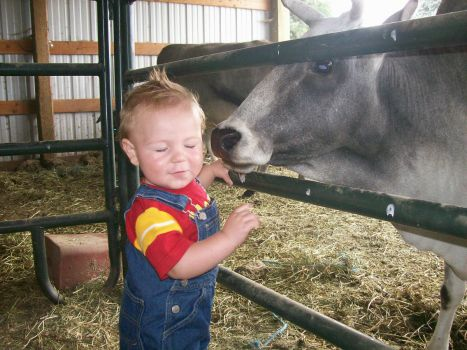 Grandson with mini Cow