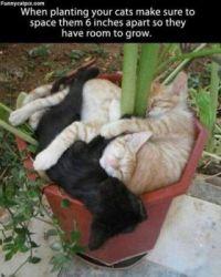 HOW YOUR GARDEN GROWS
