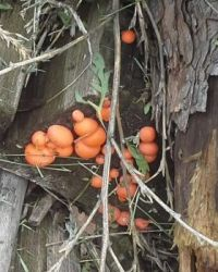 Fungus in the woodpile