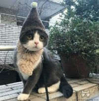 A kitten with a magician's hat