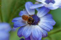 Busy as a Bee on a Daisy..