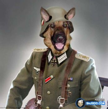 General Eckzahn (German for Canine)