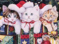 Christmas Kittens