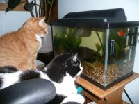 Watching Fish