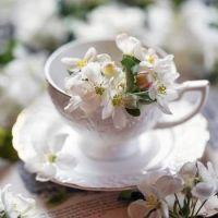Tea Cup & Blossoms