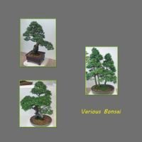 Various-Bonsai,