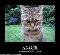 danger kitty