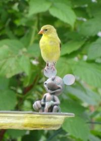 Female finch.........on a mouse?
