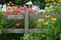 ,Fence with flowers