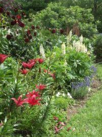My lost garden 10
