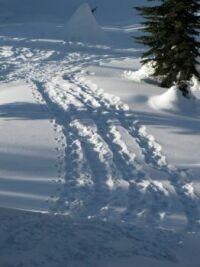 Snowshoe Patterns