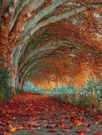 tree tunnel in Essen
