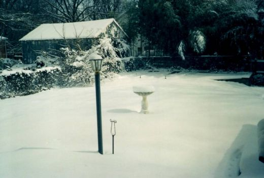 My back yard a few years ago.