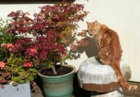 Ferdy - joining the autumn colours