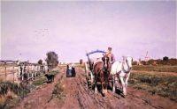 Horses on a path (1884)