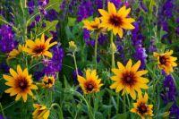 Wildflower_Field_6_em9yw1