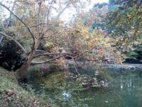 Agostyáni Arborétum 2