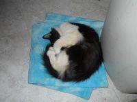 Snookum Puss 1
