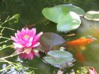 Flower and fish