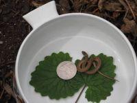 Infant snake