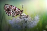 Butterfly in the dreams