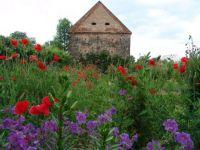 Zahrada u zámku Třebešice