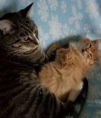Jackson and his Kitten